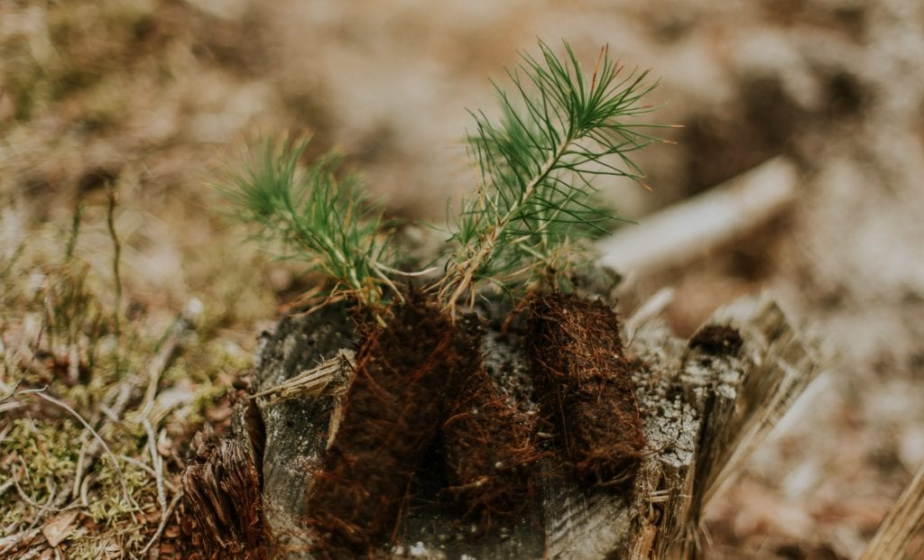 tree planting carbon offsets