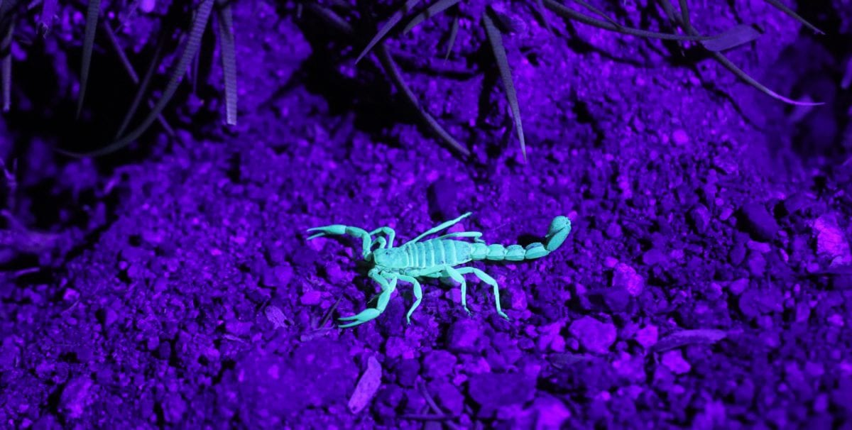 A Woman Was Stung by a Scorpion on a United Flight